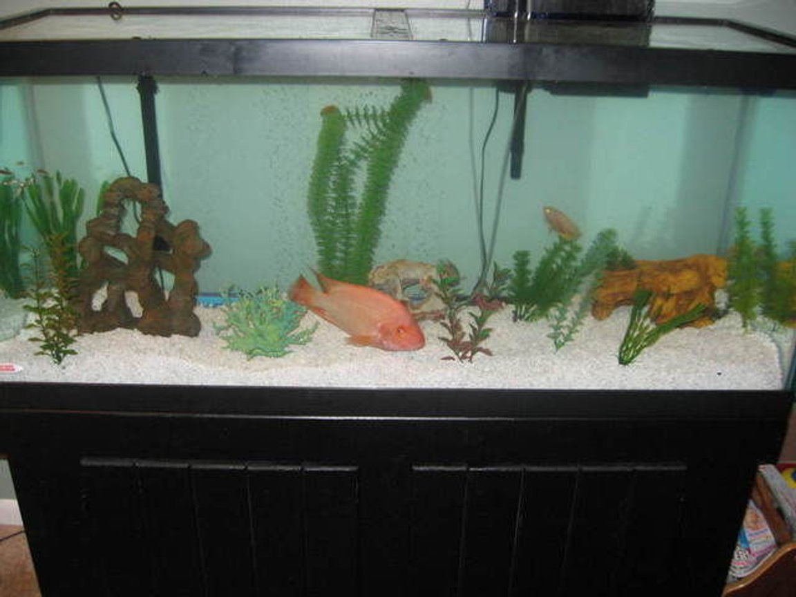 75 gallons freshwater fish tank (mostly fish and non-living decorations) - My 75 gallon tank