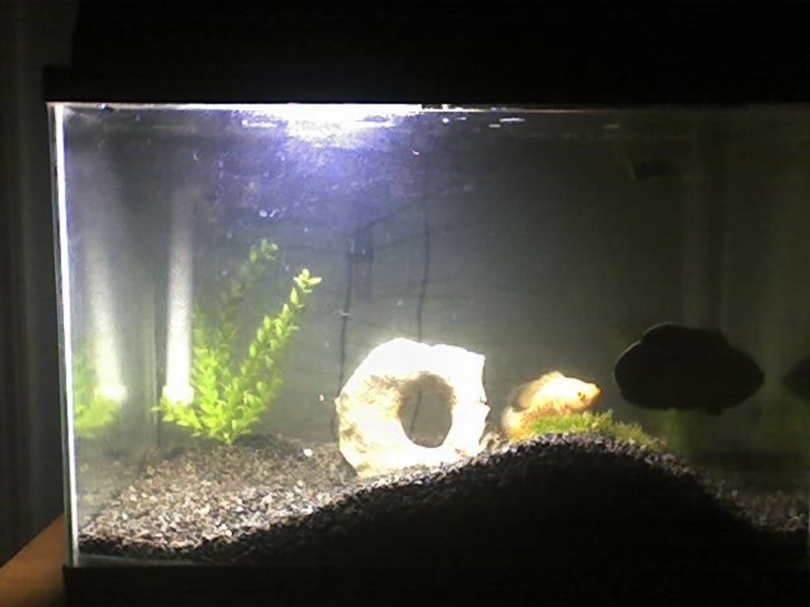 20 gallons freshwater fish tank (mostly fish and non-living decorations) - New tank set up way nicer