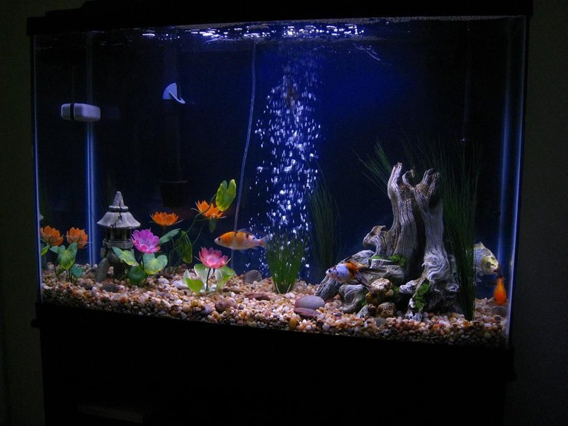 45 gallons freshwater fish tank (mostly fish and non-living decorations) - 45Gal Beauty