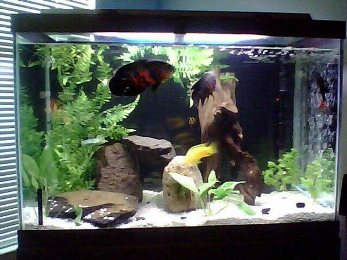 65 gallons freshwater fish tank (mostly fish and non-living decorations) - First shot.