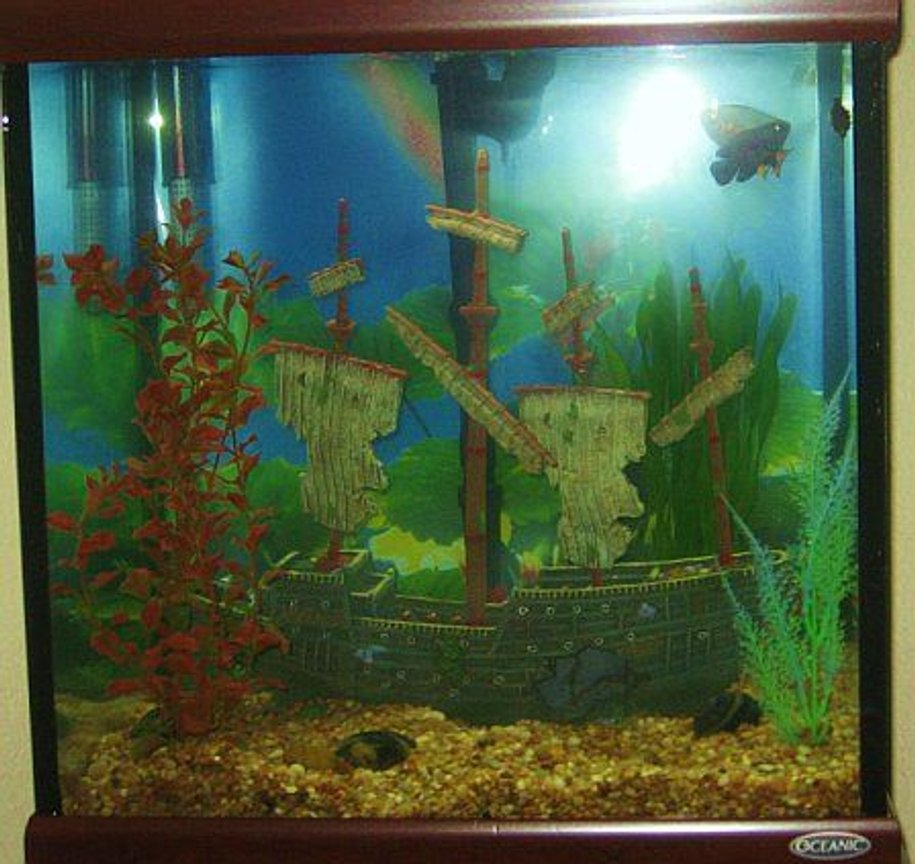 30 gallons freshwater fish tank (mostly fish and non-living decorations) - Shipwrecked