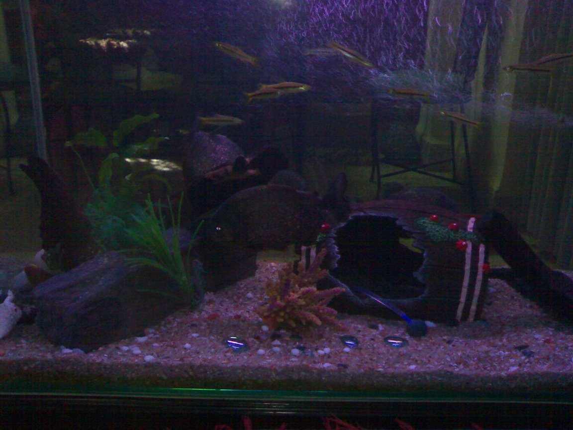 50 gallons freshwater fish tank (mostly fish and non-living decorations) - Front view of the tank
