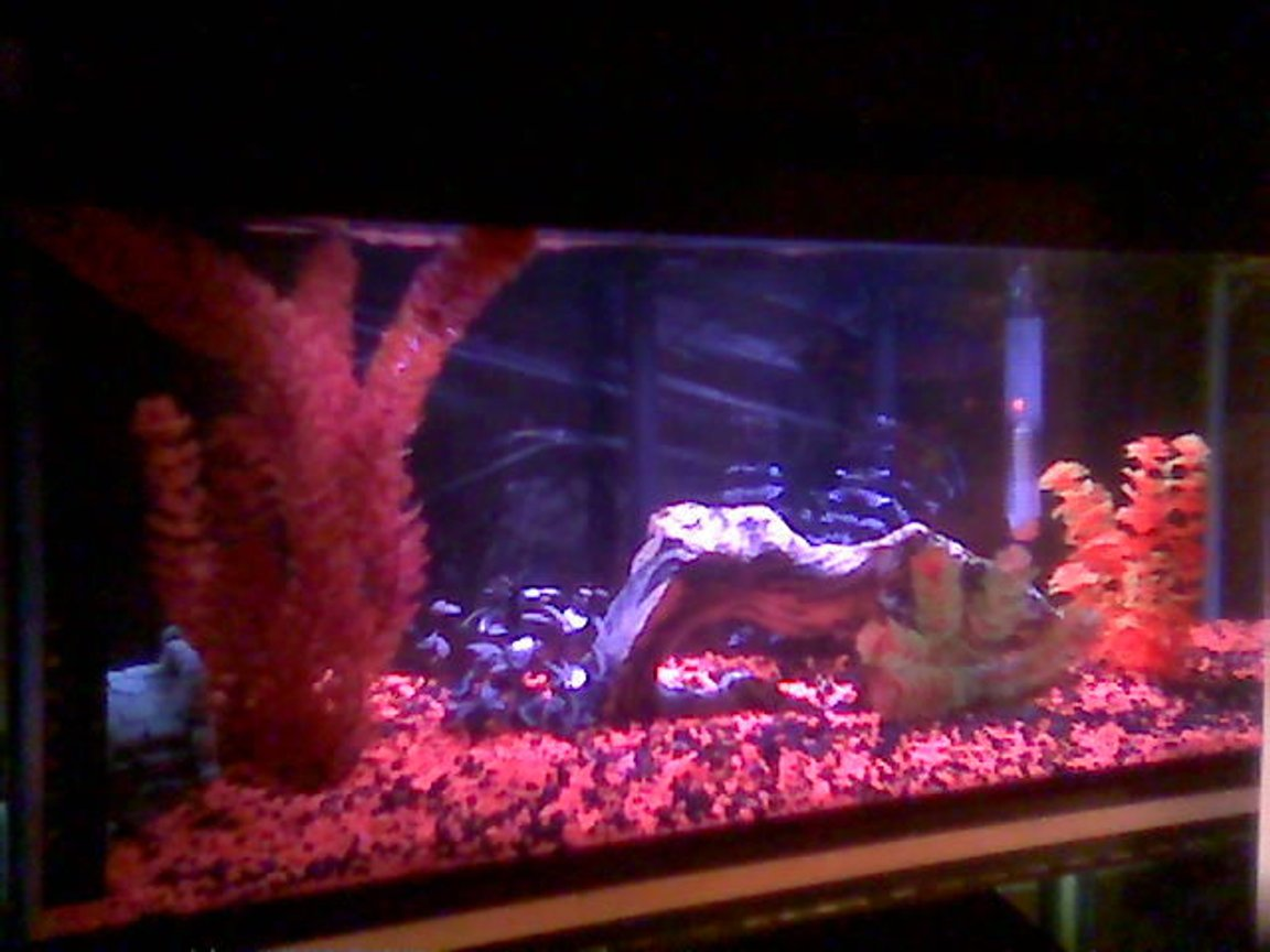 75 gallons freshwater fish tank (mostly fish and non-living decorations) - 20g who deys new home