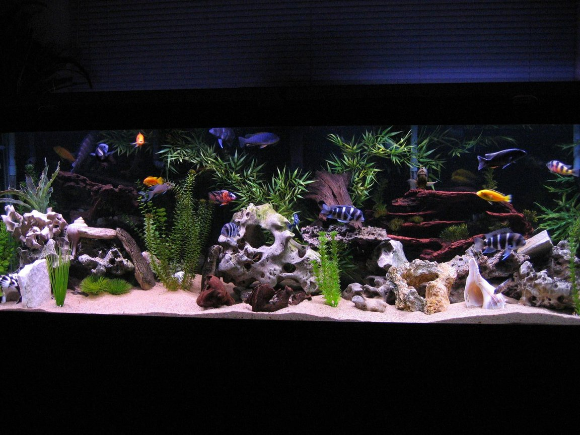 125 gallons freshwater fish tank (mostly fish and non-living decorations) - 125 Gallon African Cichlid Tank