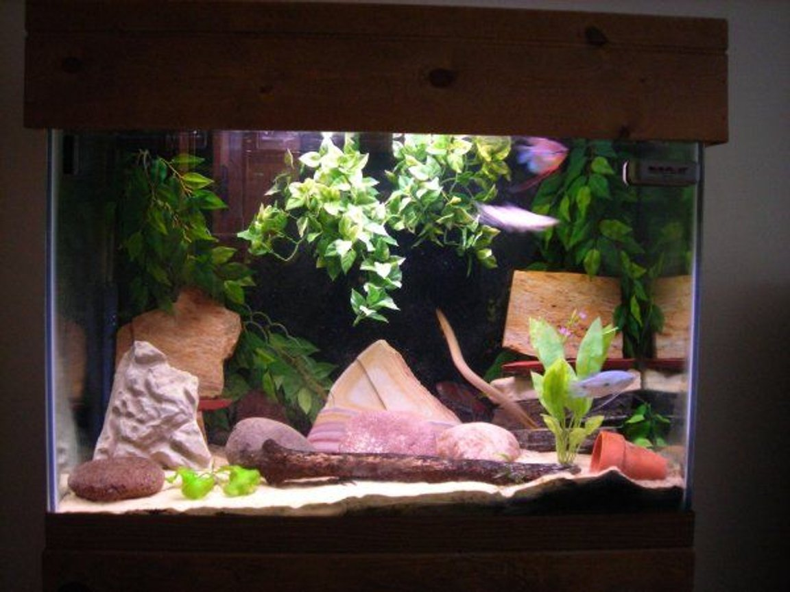 65 gallons freshwater fish tank (mostly fish and non-living decorations) - 65 Gallon, mostly loaches and gouramis
