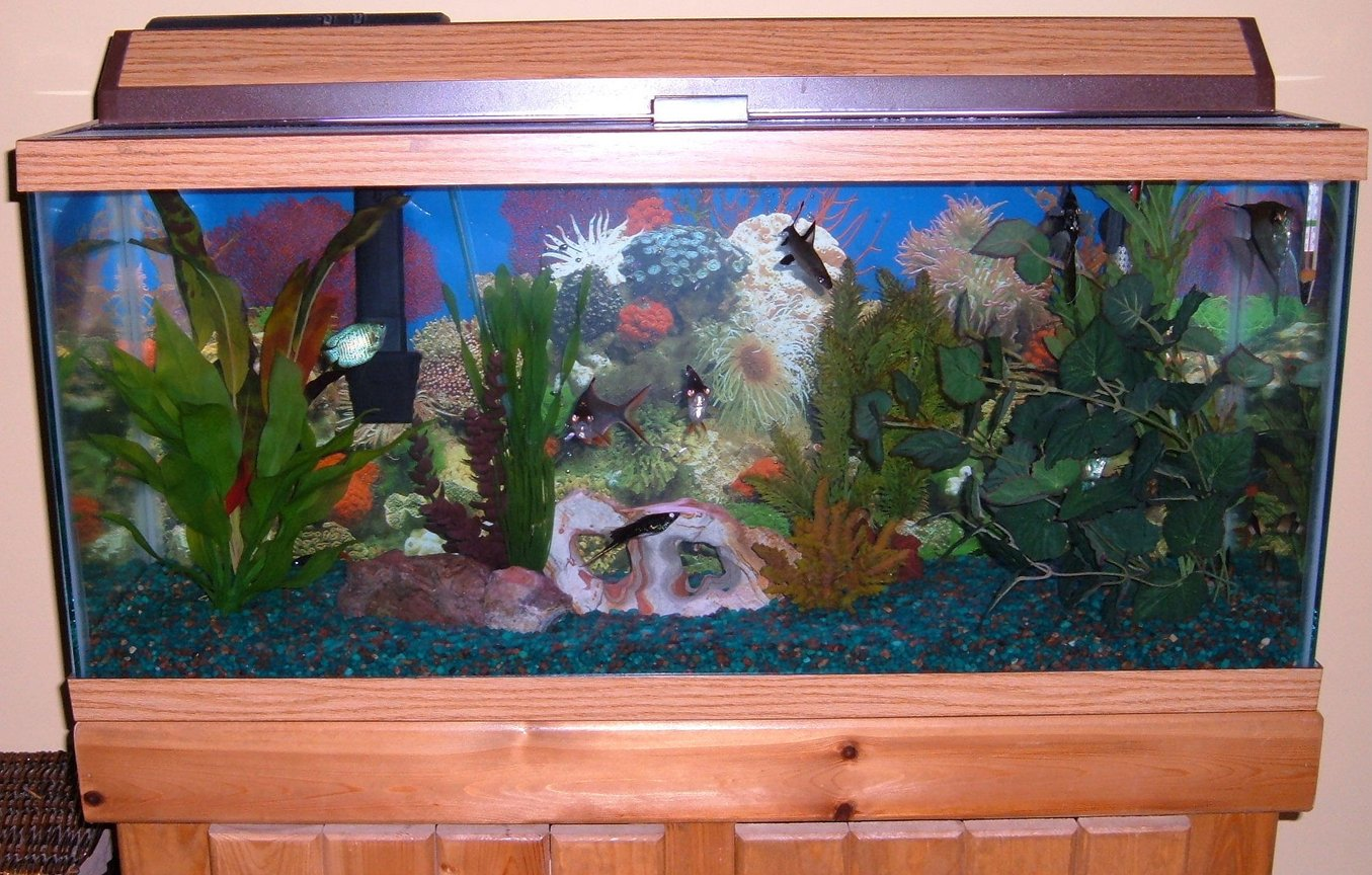 30 gallons freshwater fish tank (mostly fish and non-living decorations) - My 30 gallon freshwater tank.