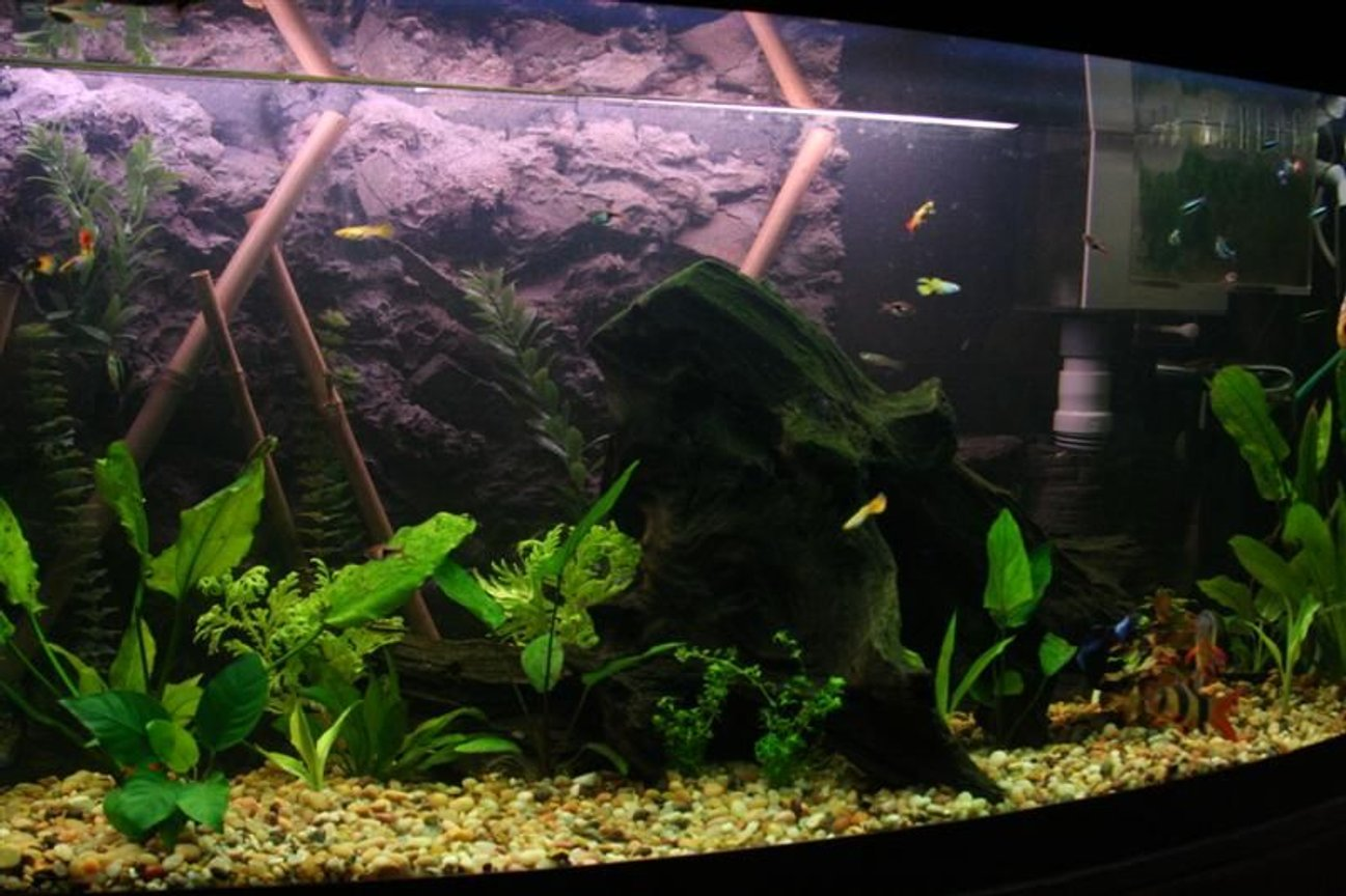72 gallons freshwater fish tank (mostly fish and non-living decorations) - My main tank