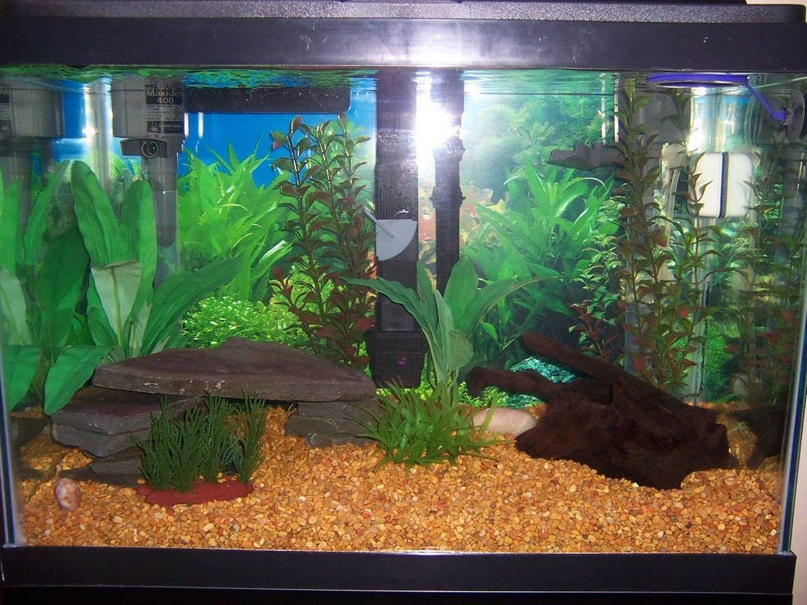 20 gallons freshwater fish tank (mostly fish and non-living decorations) - Natural themed freshwater 20 gallon high with amazons swords, red ludwigia, crypt beckettii, and willow moss. I also have a blue-slate cave and malaysian driftwood.