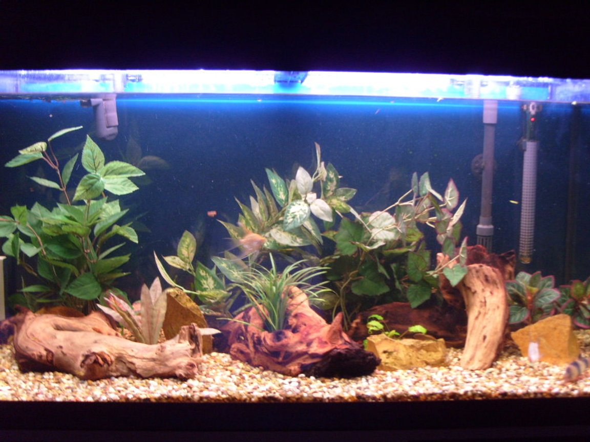 44 gallons freshwater fish tank (mostly fish and non-living decorations) - My tank