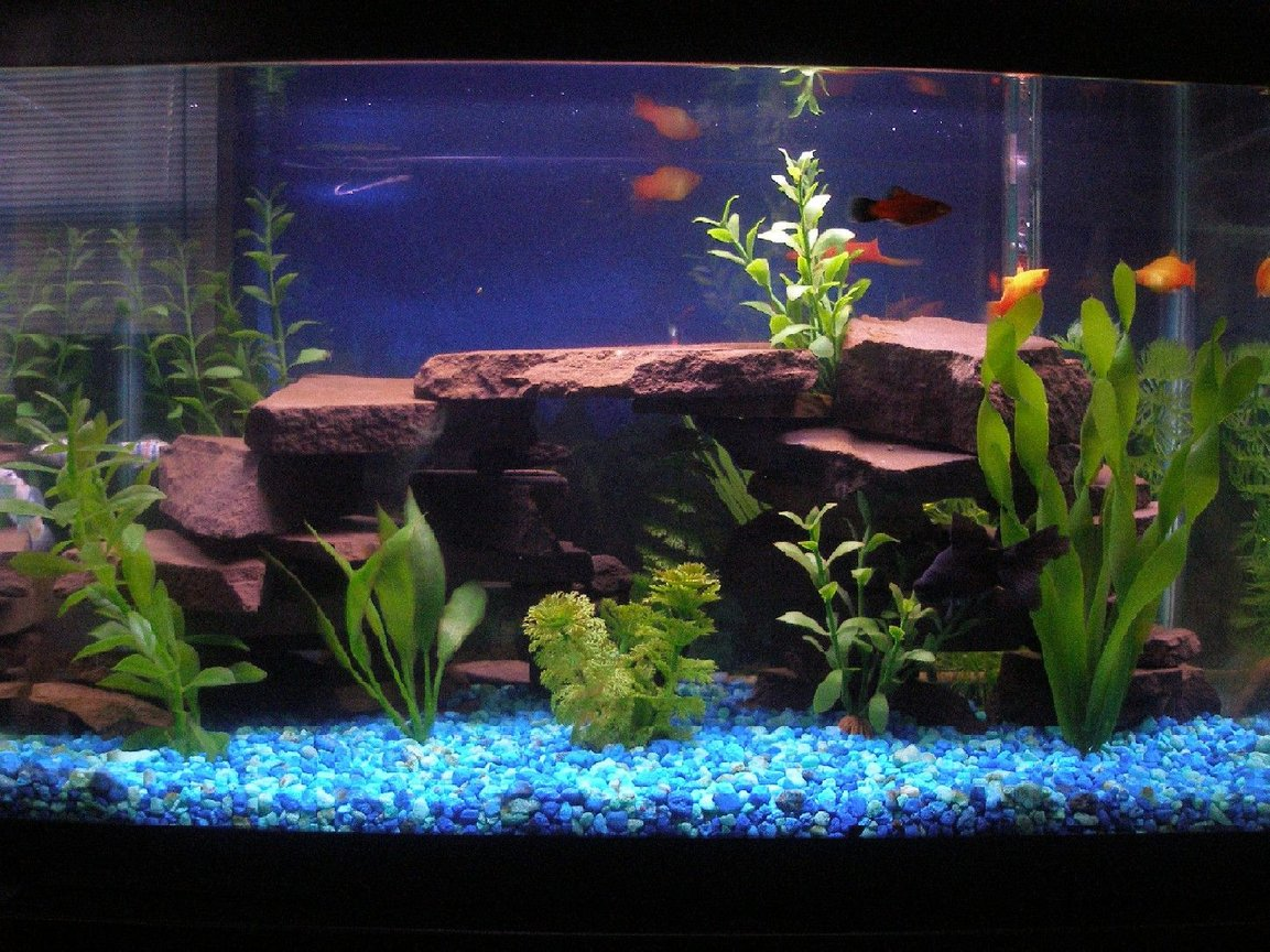 "10 gallons freshwater fish tank (mostly fish and non-living decorations) - First ever tank. 10 Gal. built the rock ledges with a maryland flagstone used in our koi ponds. 18"" bubble wand along back surface is off due to the finding of 2 really small babies. Led lighting in coves. thanks."