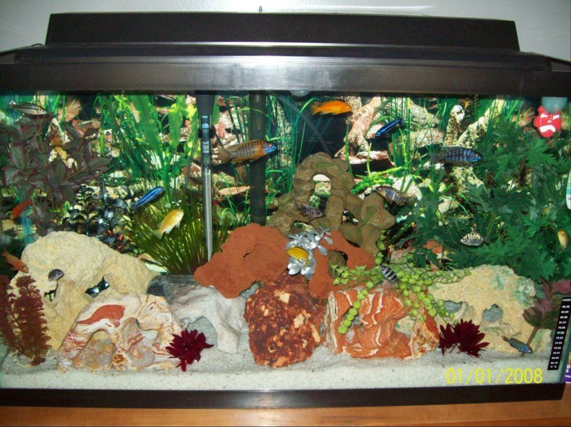 40 gallons freshwater fish tank (mostly fish and non-living decorations) - 40 Gallon African Cichlids