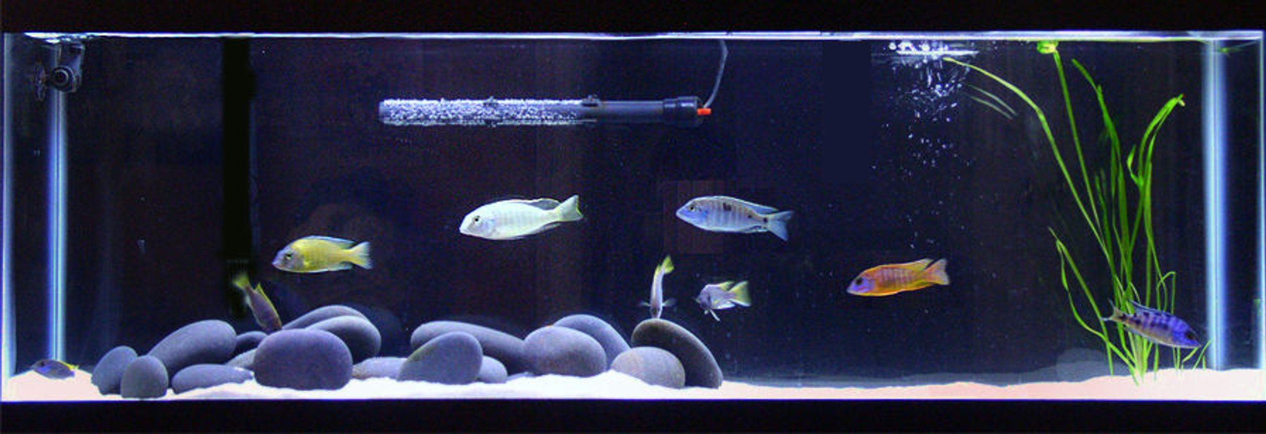 40 gallons freshwater fish tank (mostly fish and non-living decorations) - All-Glass 40 Long (48 x 12 x 17); Rena Filstar XP2 and AquaClear 50; Marineland Visi-Therm Stealth 200W; Coralife T-5 Aqualight Double Strip (10,000 K / 460nm Actinic); Mystic White II Pool Filter Sand; Mexican Beach Pebbles; Black Background