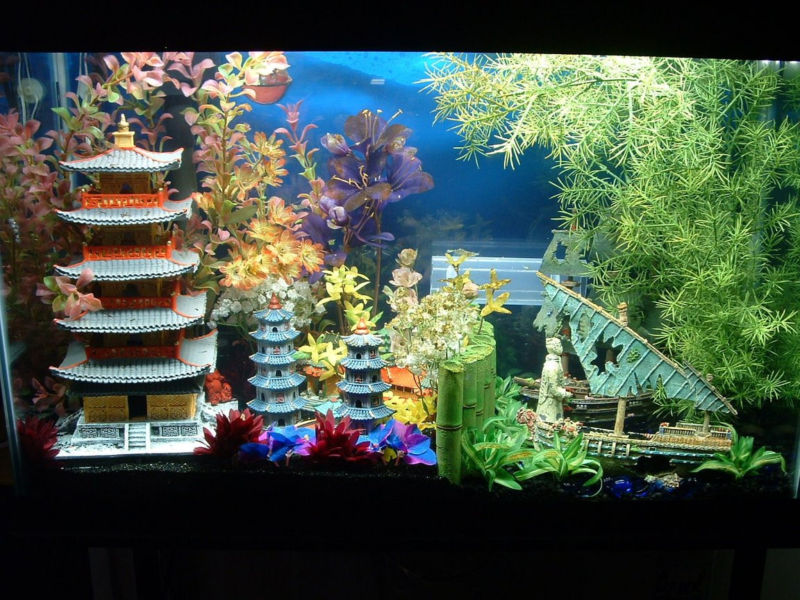7 gallons freshwater fish tank (mostly fish and non-living decorations) - my 29 gal. tank
