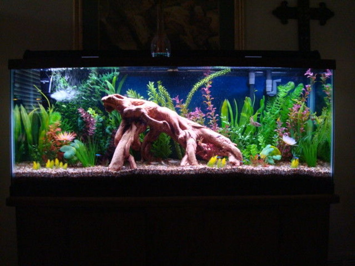 55 gallons freshwater fish tank (mostly fish and non-living decorations) - My new 55 gallon tank with artificial plants and driftwood full view. Please see the additional pictures for close ups of the features of this tank.