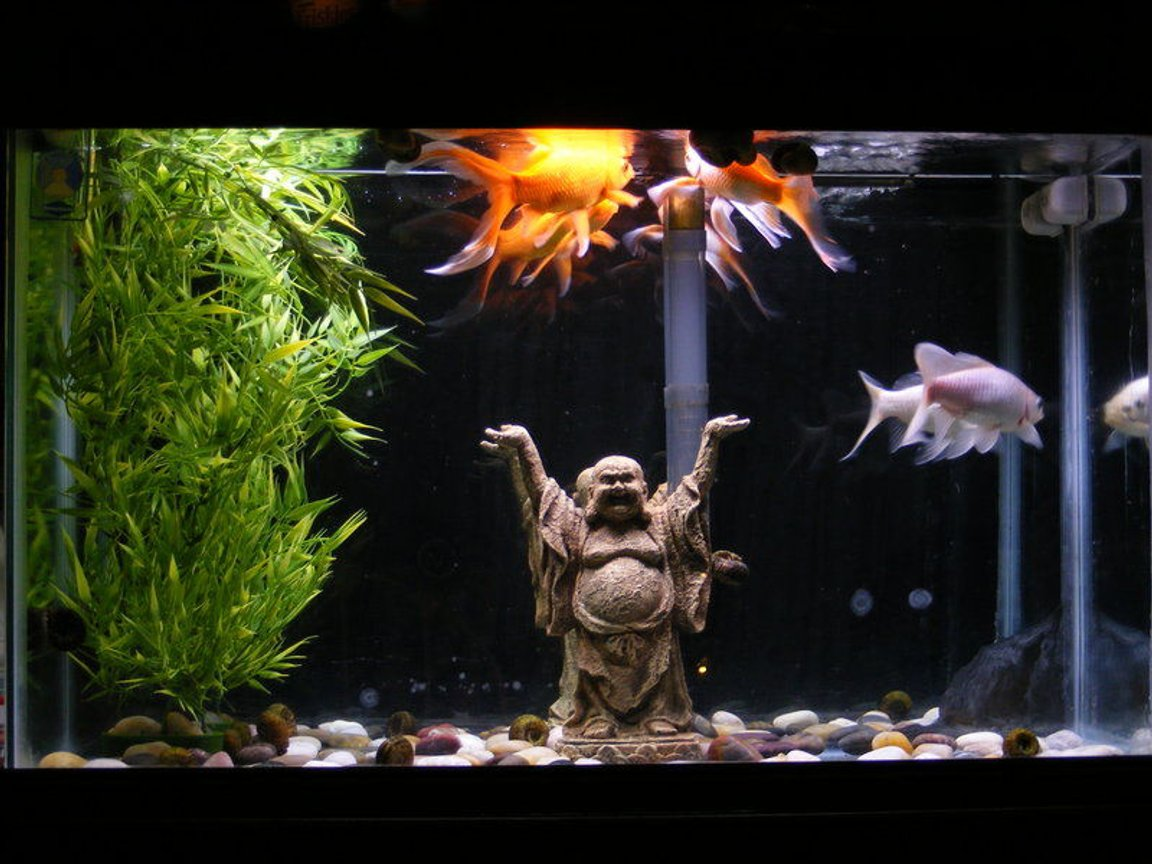 29 gallons freshwater fish tank (mostly fish and non-living decorations) - 29 gallon temp tank of 3 goldfish. Plastic bamboo plant with a buddha and some river rocks scattered on the bottom. Mirrored background is a little messed up but the tank was free from freecycle so no complaints from me.