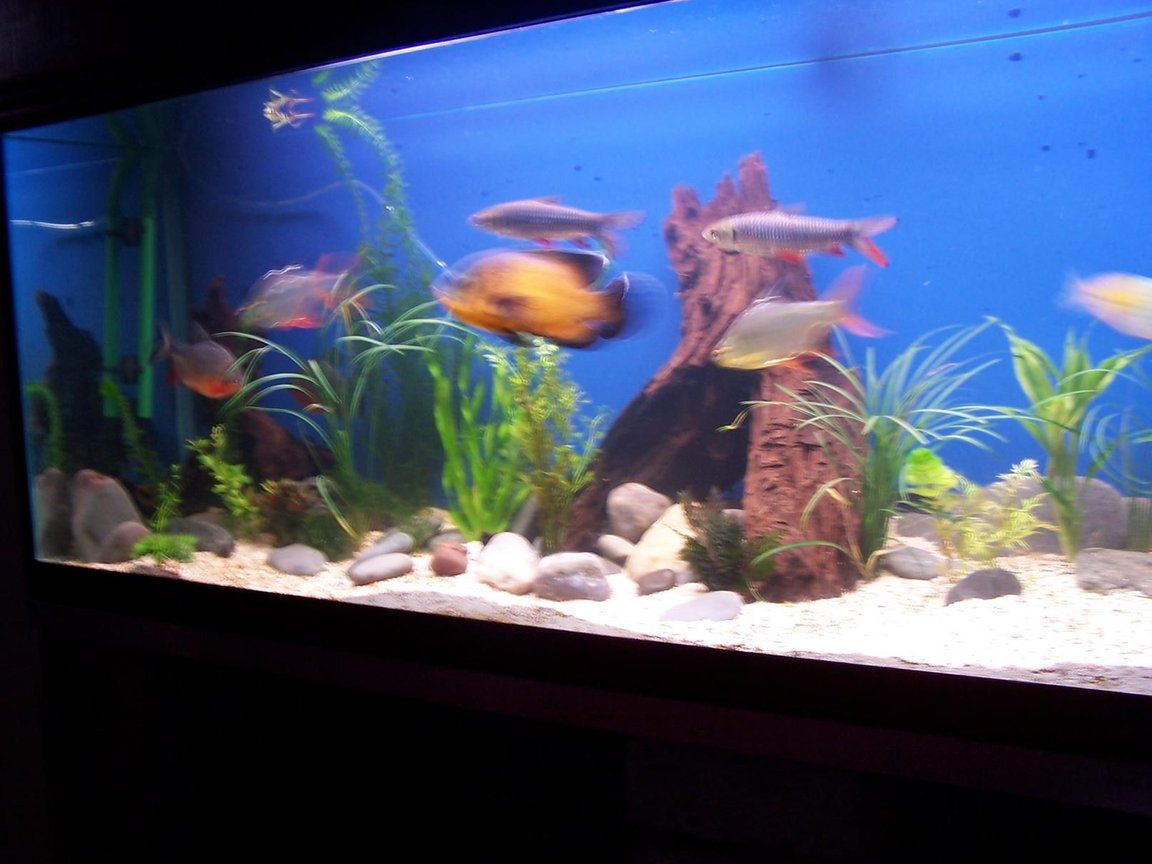 150 gallons freshwater fish tank (mostly fish and non-living decorations) - my tank pic 2