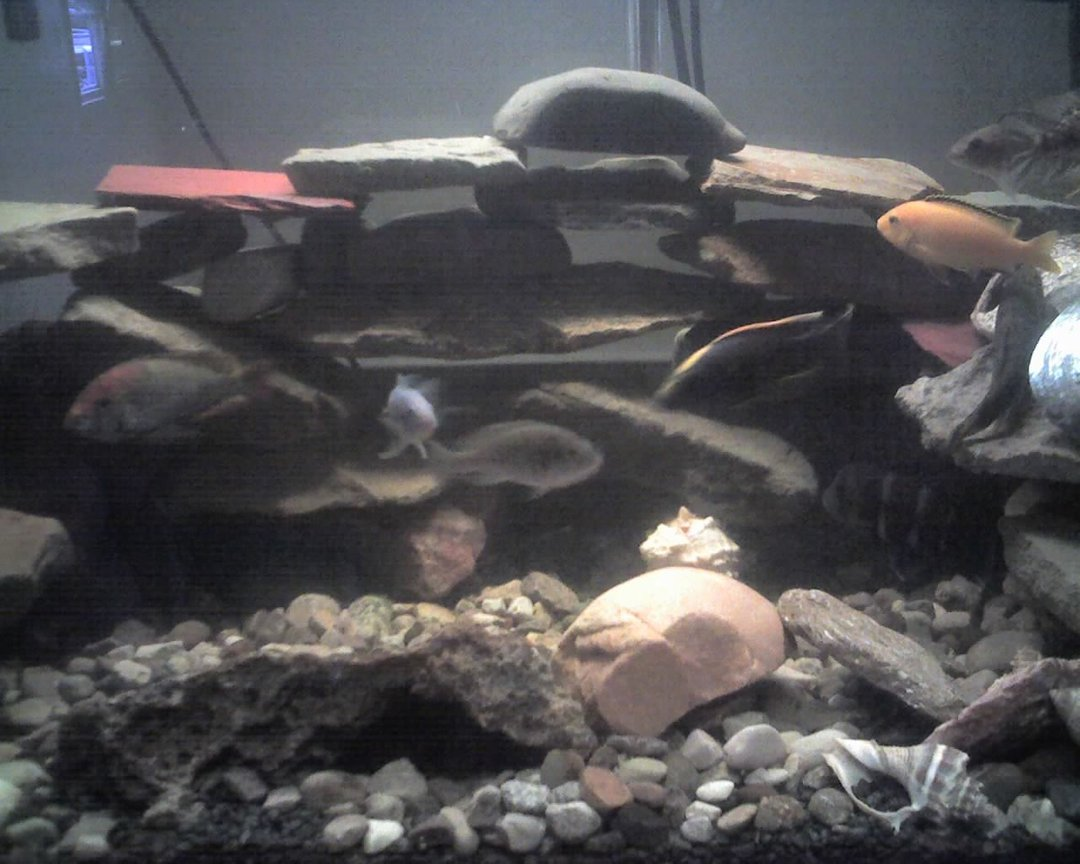 60 gallons freshwater fish tank (mostly fish and non-living decorations) - this is the new set up of my tank