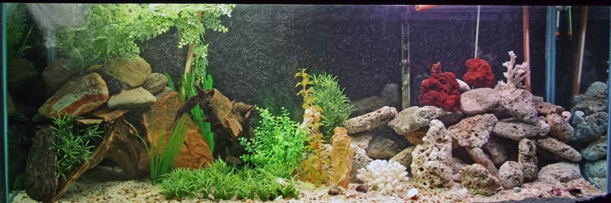 110 gallons freshwater fish tank (mostly fish and non-living decorations) - my new 110 gallon