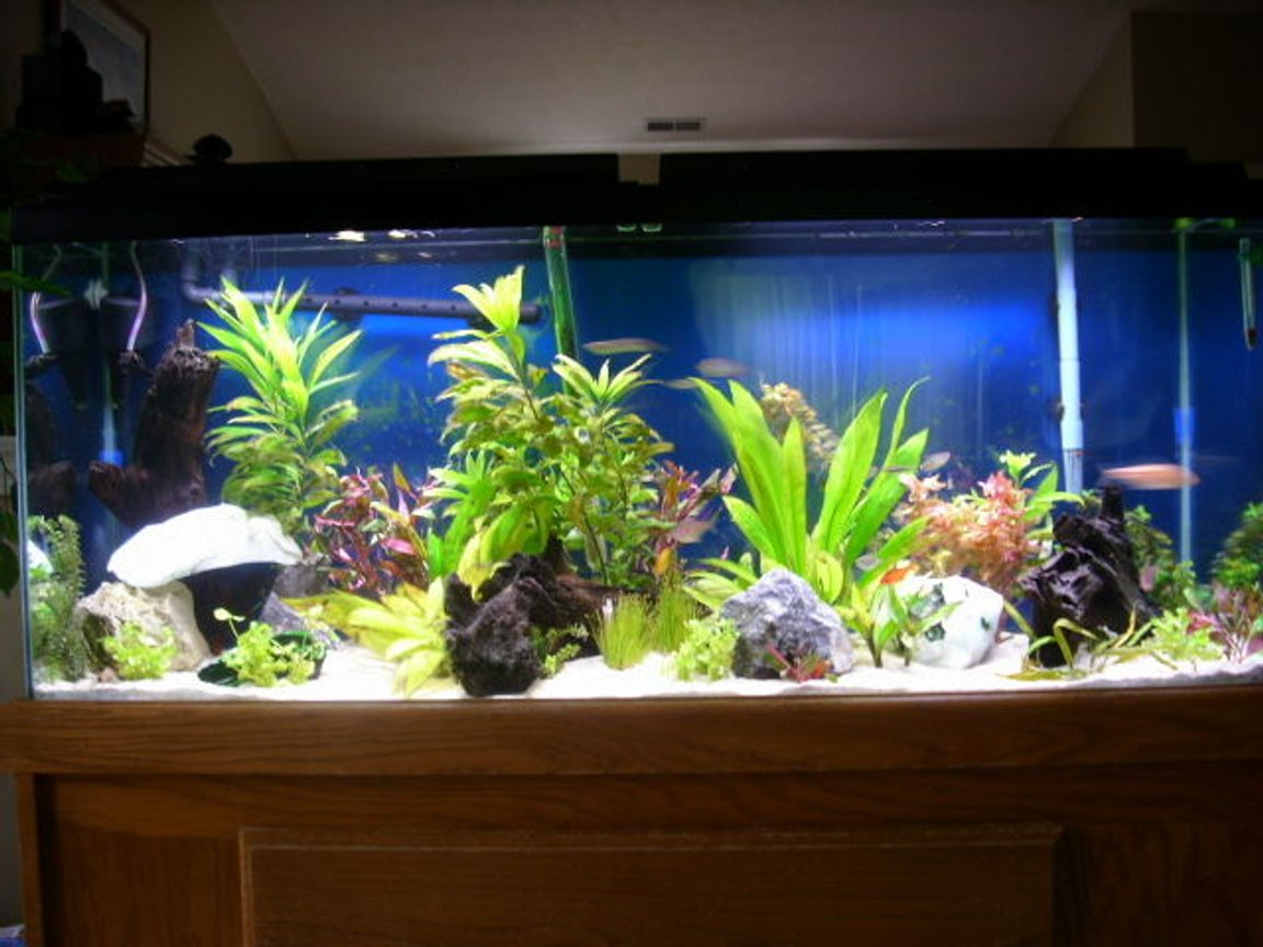 55 gallons freshwater fish tank (mostly fish and non-living decorations) - 55 gal planted aquarium-set up 5/2007.