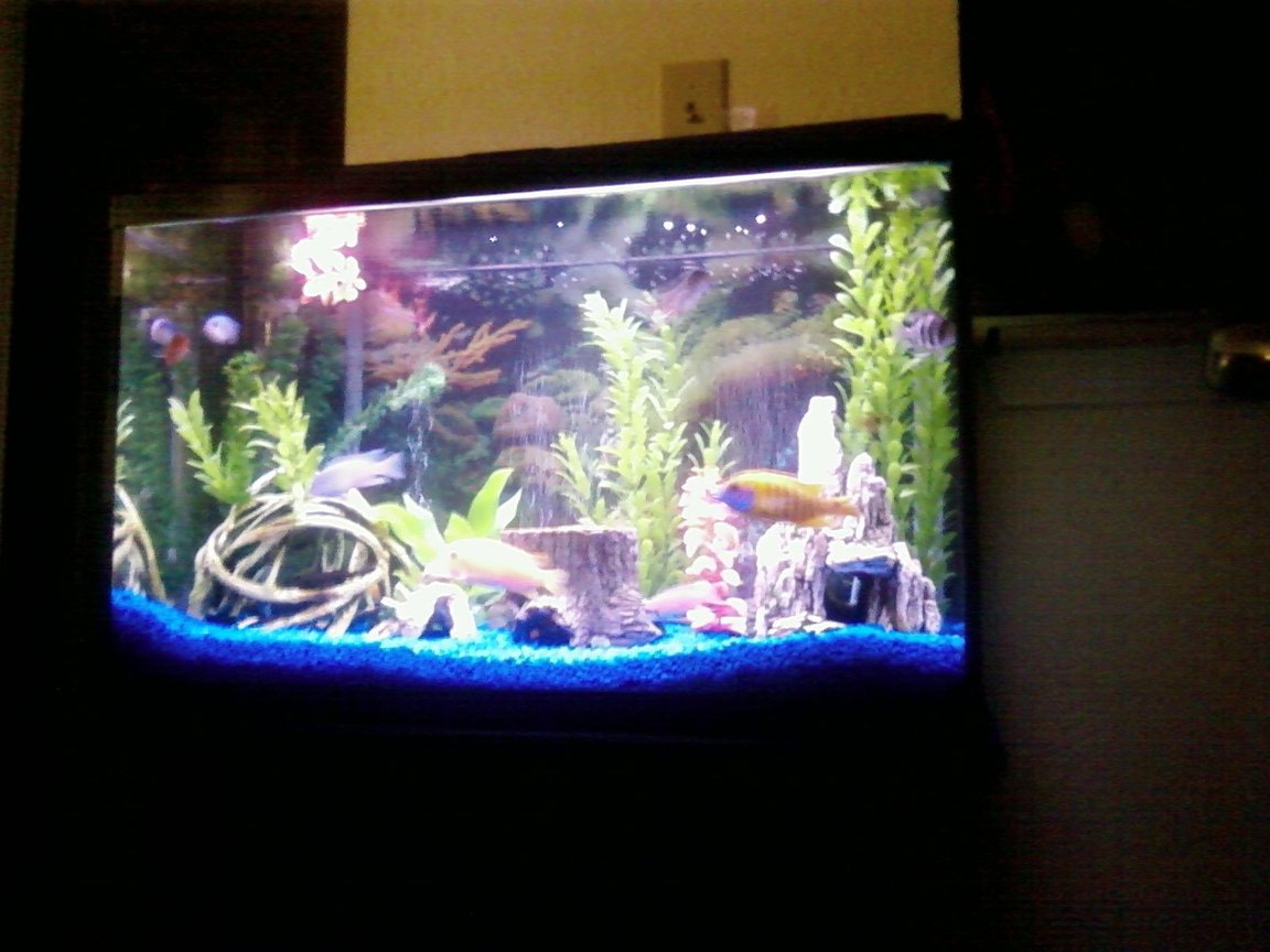 29 gallons freshwater fish tank (mostly fish and non-living decorations) - View of whole tank and stand.
