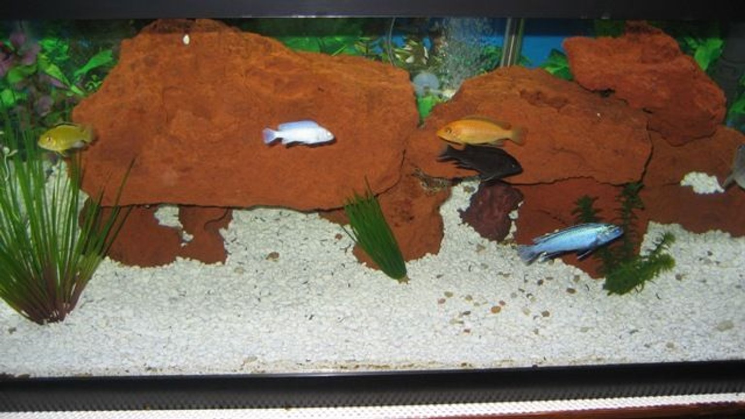 150 gallons freshwater fish tank (mostly fish and non-living decorations) - My old 40g African tank with Lava Rock