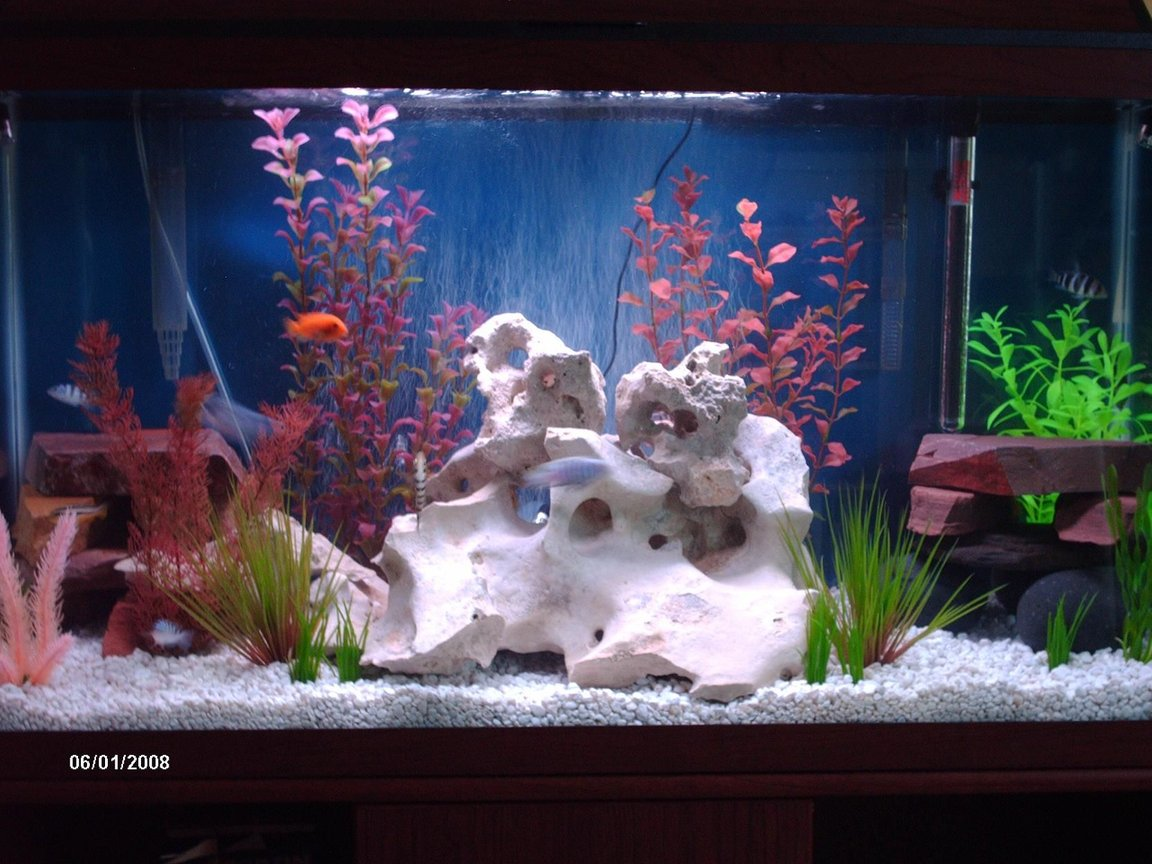 38 gallons freshwater fish tank (mostly fish and non-living decorations) - june reset