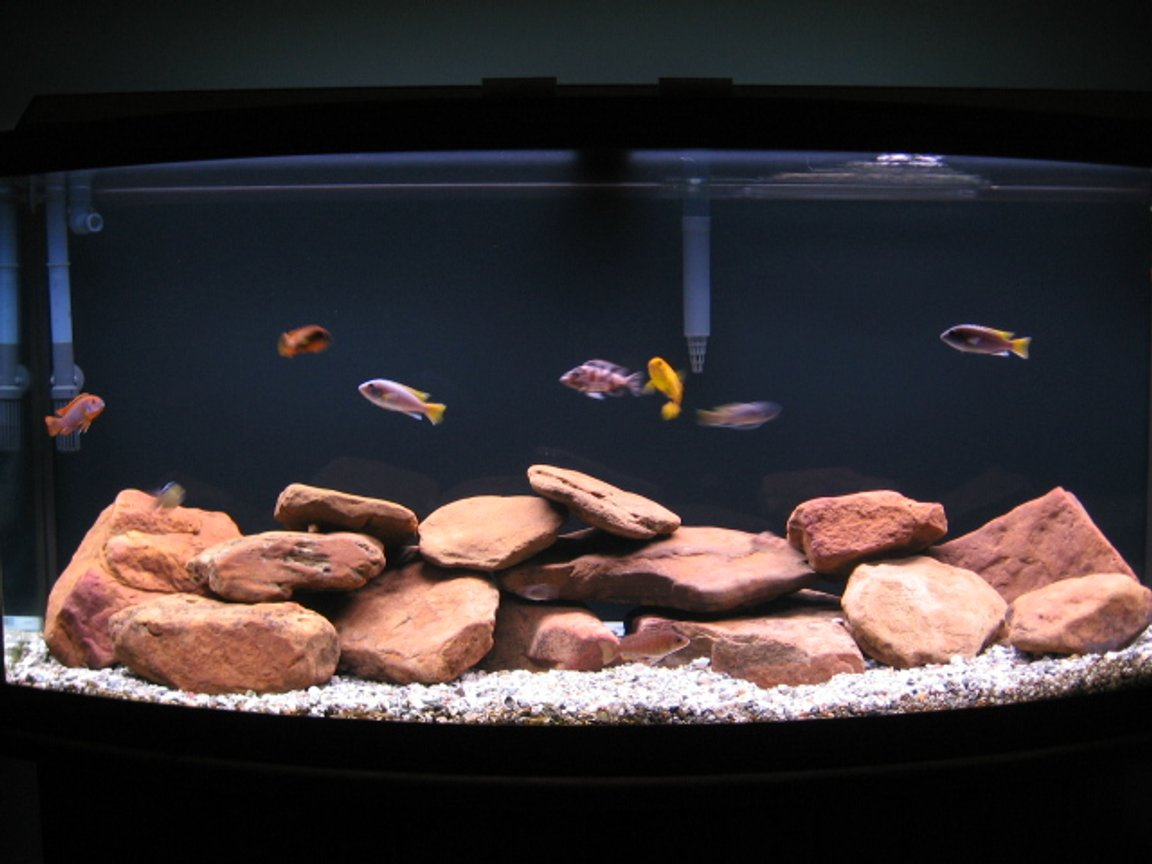 72 gallons freshwater fish tank (mostly fish and non-living decorations) - The Box Of Water