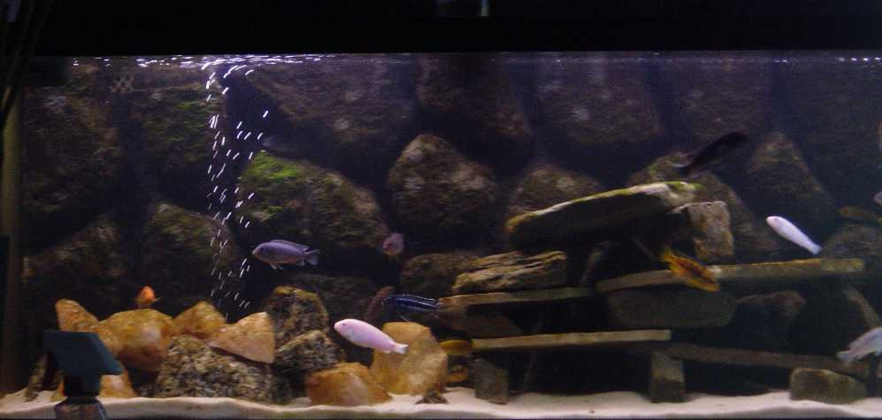 75 gallons freshwater fish tank (mostly fish and non-living decorations) - Malawi Tank