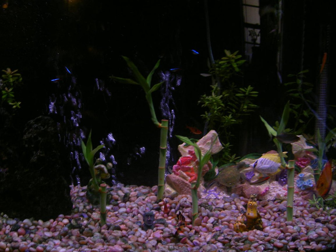 46 gallons freshwater fish tank (mostly fish and non-living decorations) - 46 bow front with live plants.