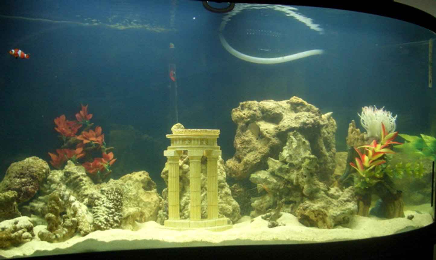 95 gallons freshwater fish tank (mostly fish and non-living decorations) - 95 Gallon WAVE tank. Eible Angel, 3-Stripe Damsel, Royal Gramma, Bullet Goby, True Percula Clown, Regal Tang. UV sterilizer, Berlin Protein skimmer. Wet/Dry filter w/overflow powered by Rio 2100+. 100 pounds of live rock, 100 pounds of live sand. 2 Cleaner shrimp. 5 Turbo Snails.