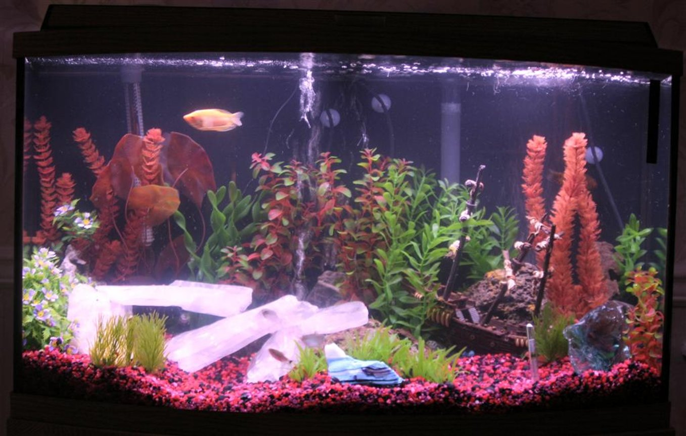 "46 gallons freshwater fish tank (mostly fish and non-living decorations) - This tank has two bubblers. One in the back right, and one in the center. There are 4 Hi-Lites: (Green, Red, Purple and Blue) that we use to enhance the bubbles, and the ""Ice"" at night."