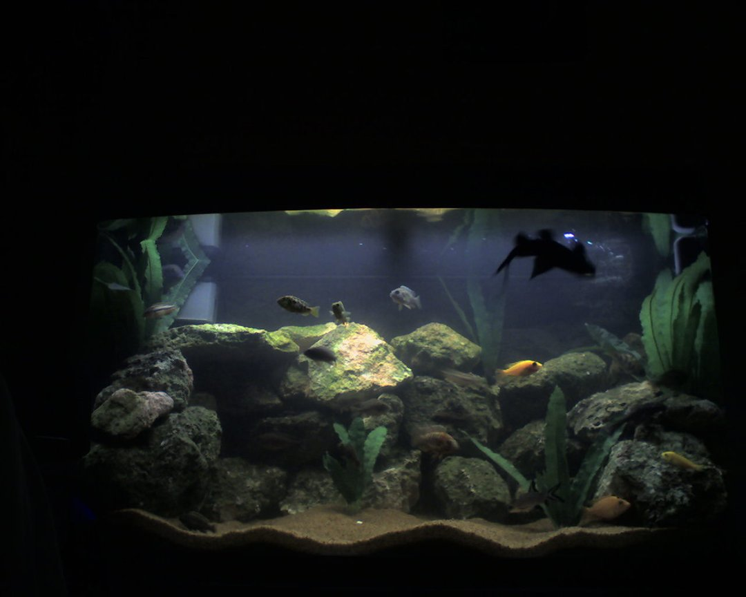 55 gallons freshwater fish tank (mostly fish and non-living decorations) - New Photo