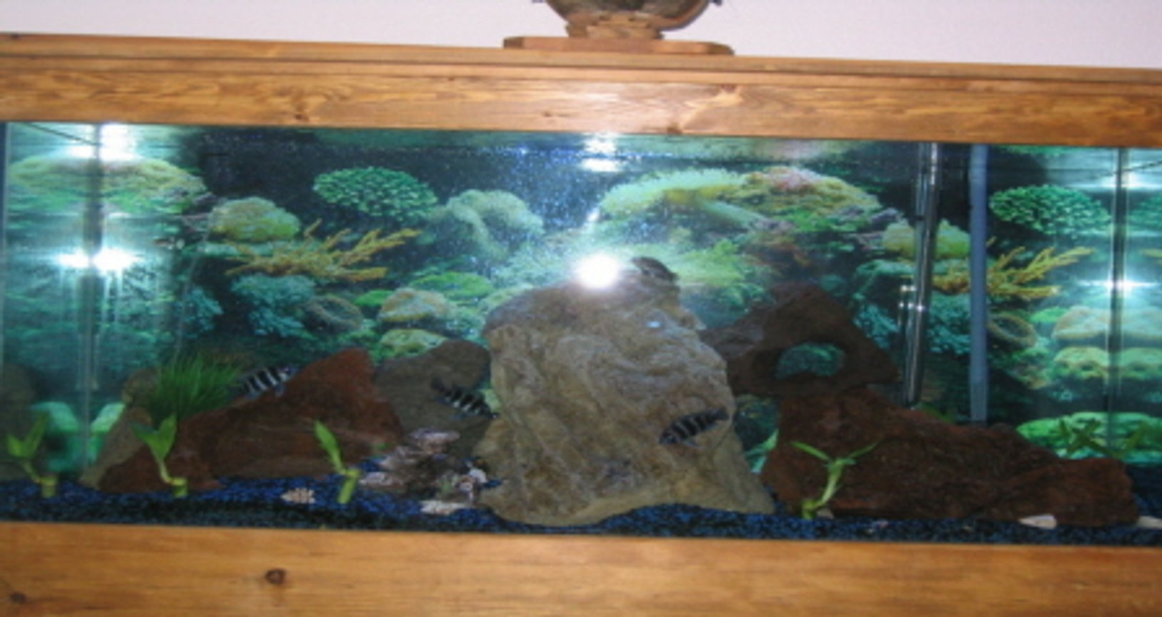 90 gallons freshwater fish tank (mostly fish and non-living decorations) - freshwater