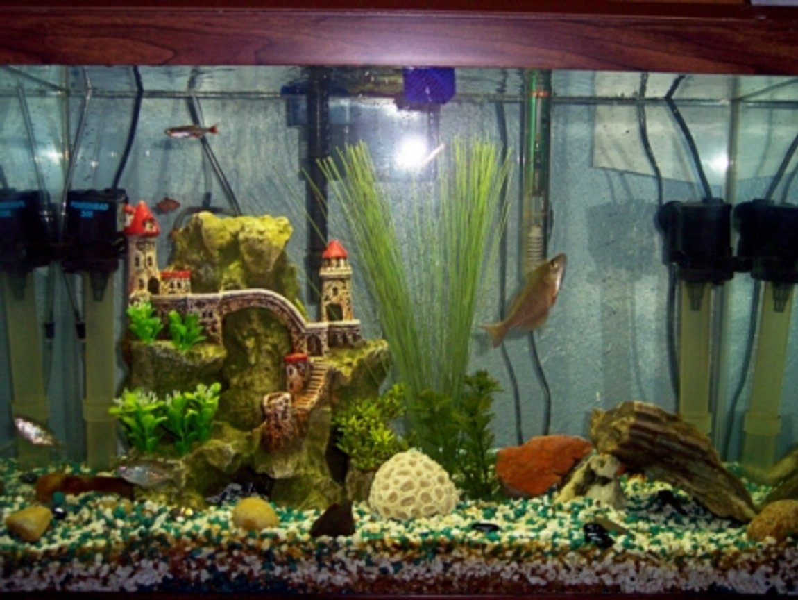 20 gallons freshwater fish tank (mostly fish and non-living decorations) - My 20 Gal. H Fish Tank With 14 Fish!!!