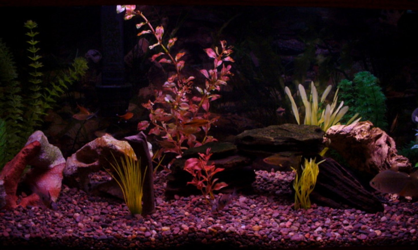 30 gallons freshwater fish tank (mostly fish and non-living decorations) - My tank. For some reason this website seems to darken the pictures. I'll have to play around with photoshop some more.