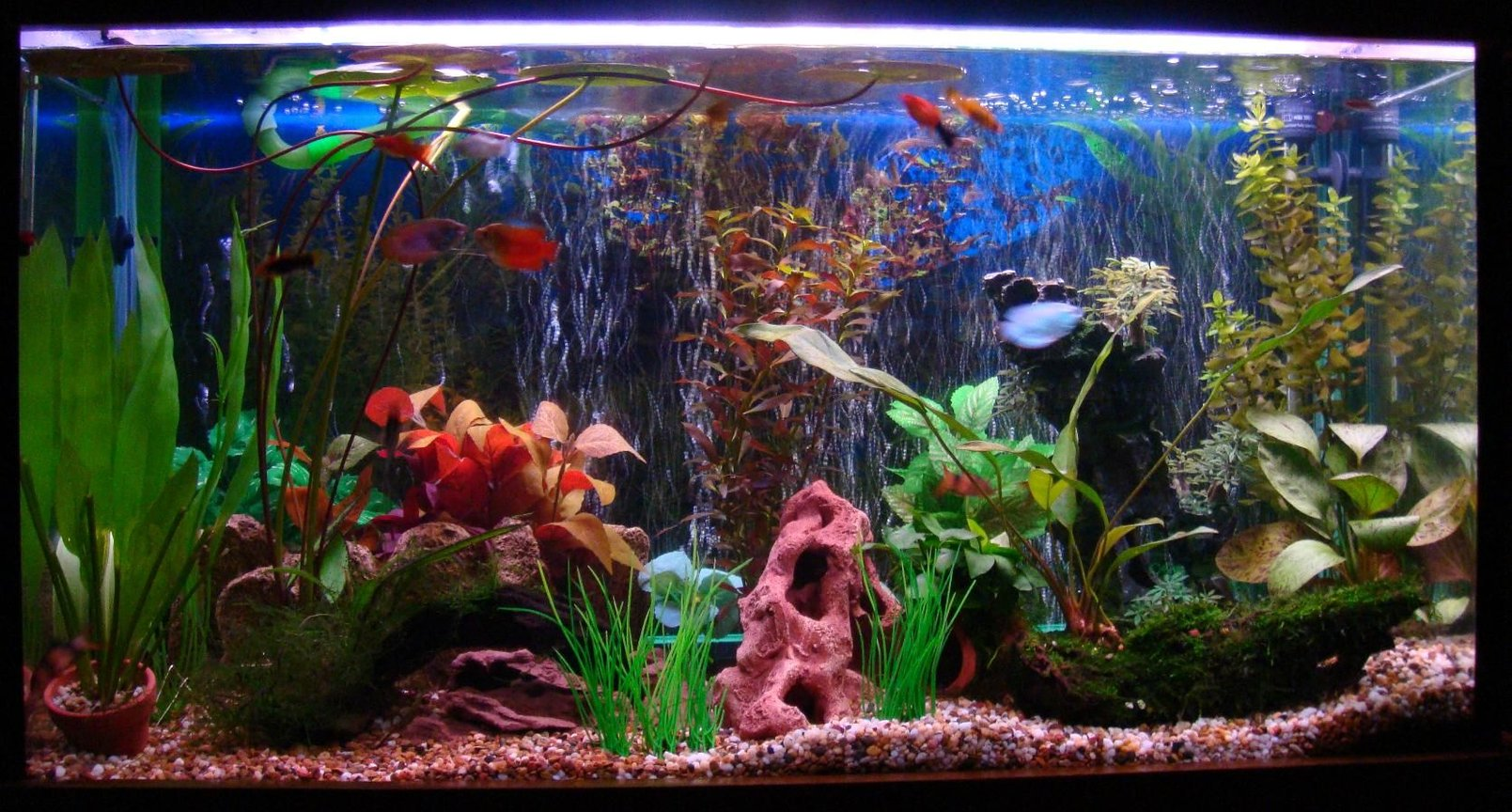 42 gallons freshwater fish tank (mostly fish and non-living decorations) - 42 gallon tank