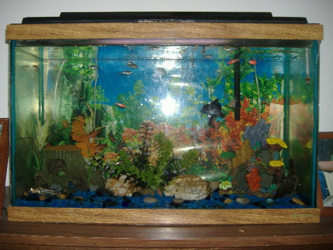 30 gallons freshwater fish tank (mostly fish and non-living decorations) - 30 gallon tank