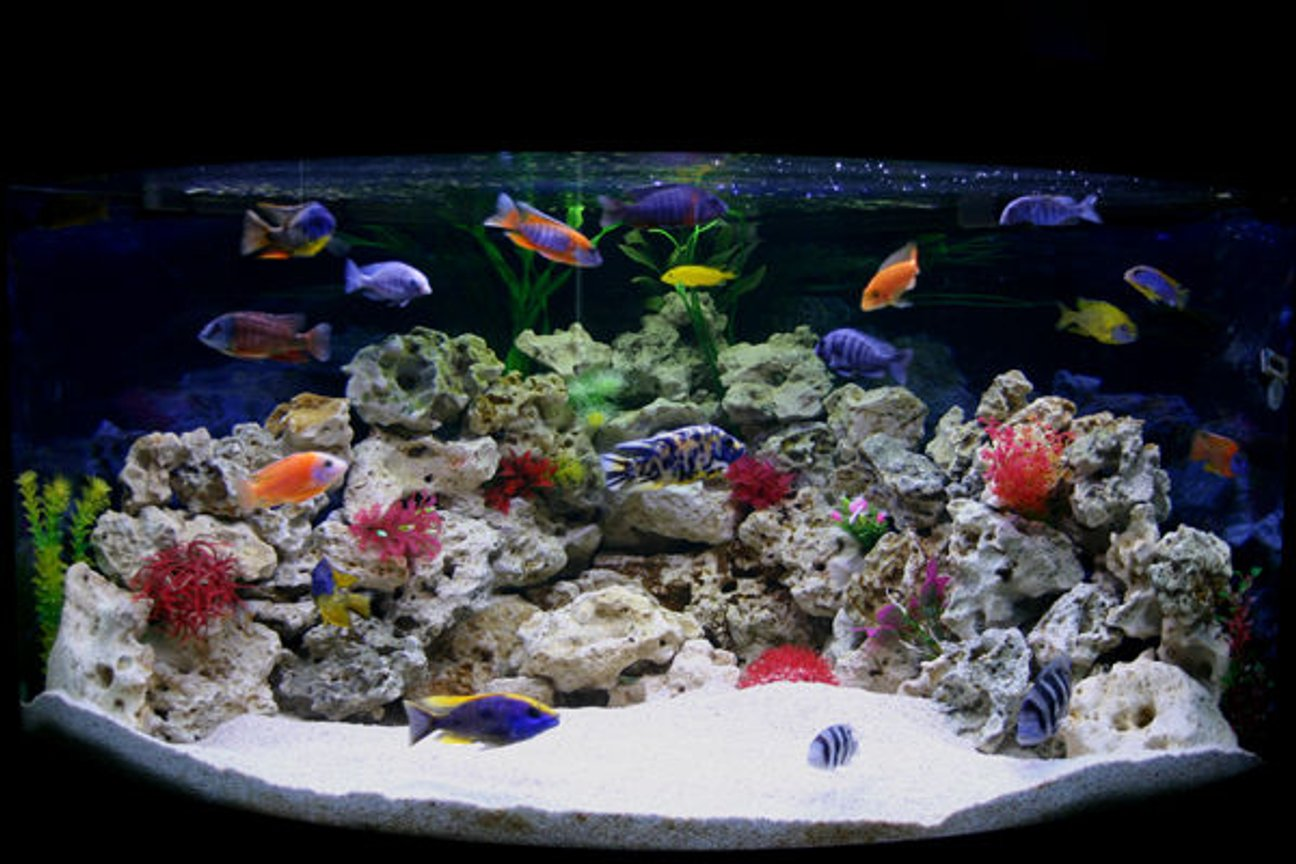 90 gallons freshwater fish tank (mostly fish and non-living decorations) - My new Male Only Show Tank Please leave your comments, Im really interested to know what people think. Thanks