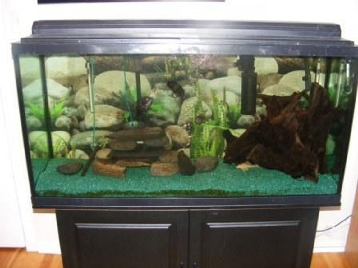 80 gallons freshwater fish tank (mostly fish and non-living decorations) - My 80 gallon