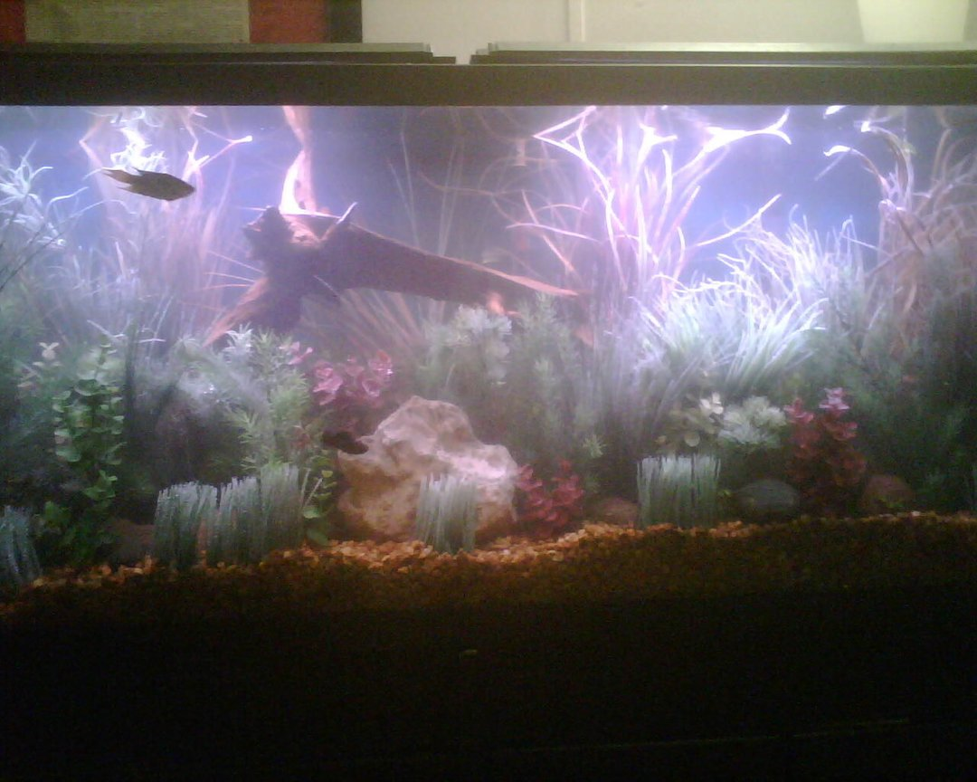 55 gallons freshwater fish tank (mostly fish and non-living decorations) - A few live plants, but mostly fake plants.