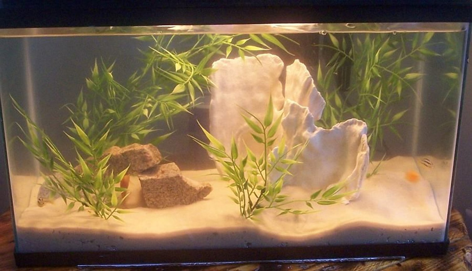 10 gallons freshwater fish tank (mostly fish and non-living decorations) - 10 gallon baby african setup