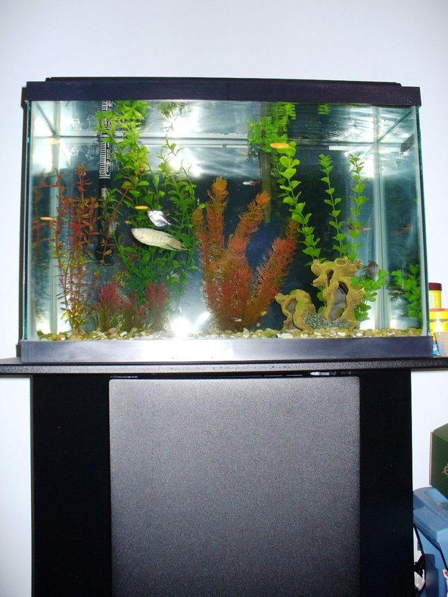 20 gallons freshwater fish tank (mostly fish and non-living decorations) - same 20 gallon, full shot with part of the stand