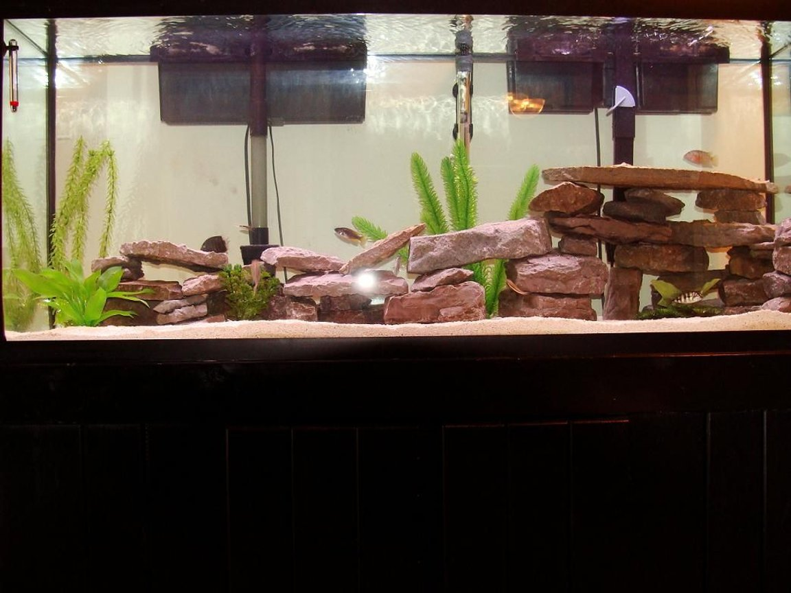 55 gallons freshwater fish tank (mostly fish and non-living decorations) - More Rockwork
