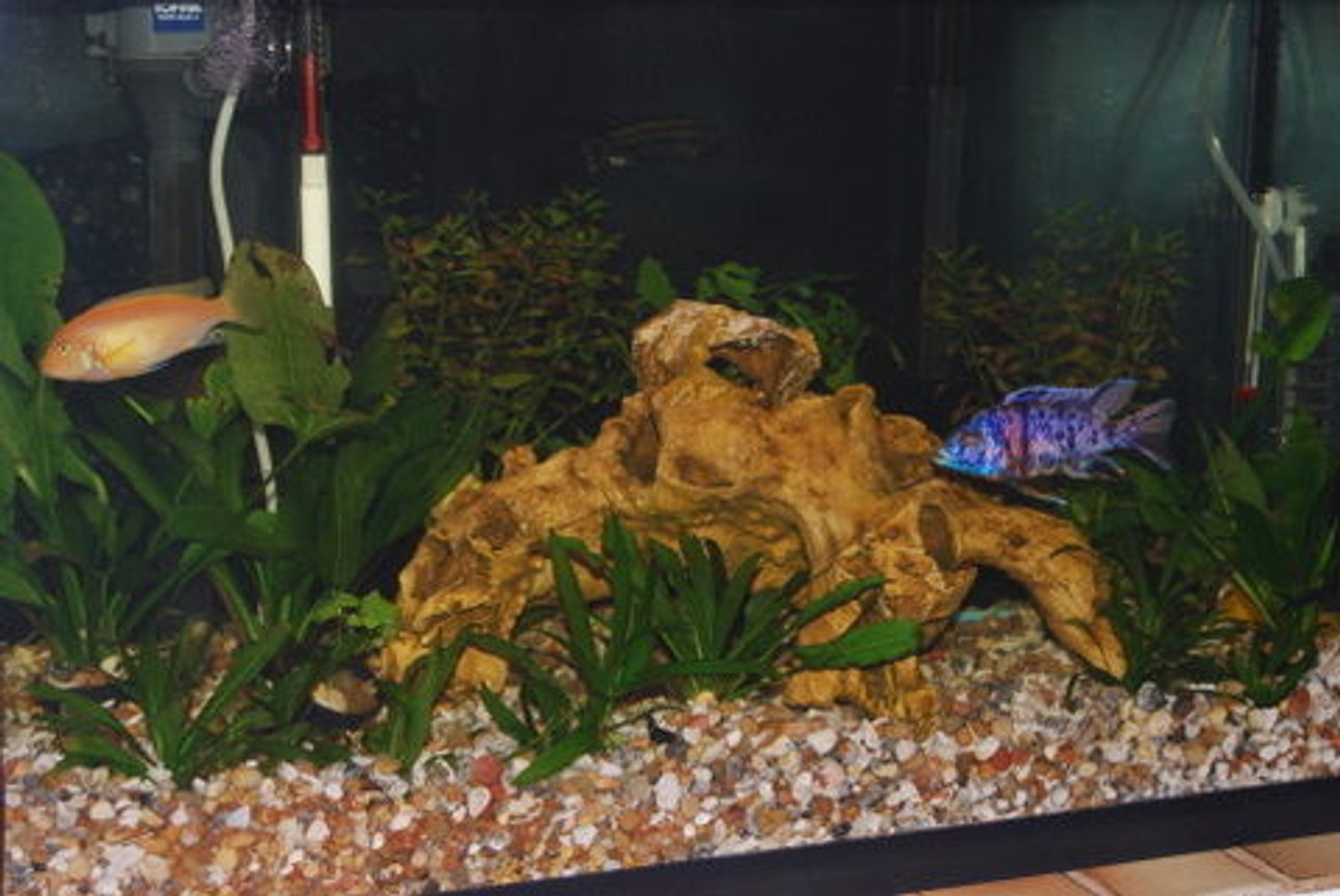 29 gallons freshwater fish tank (mostly fish and non-living decorations) - 29 gal freshwater