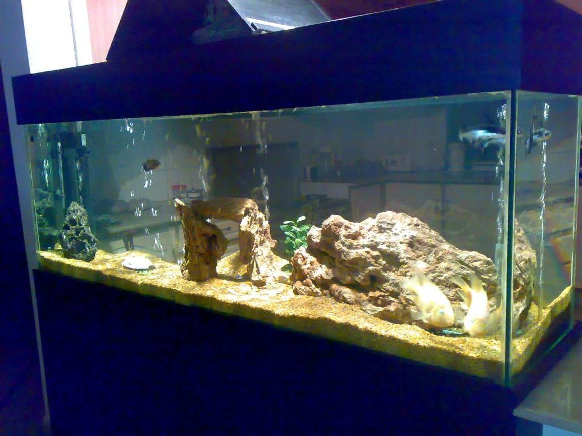 155 gallons freshwater fish tank (mostly fish and non-living decorations) - fish