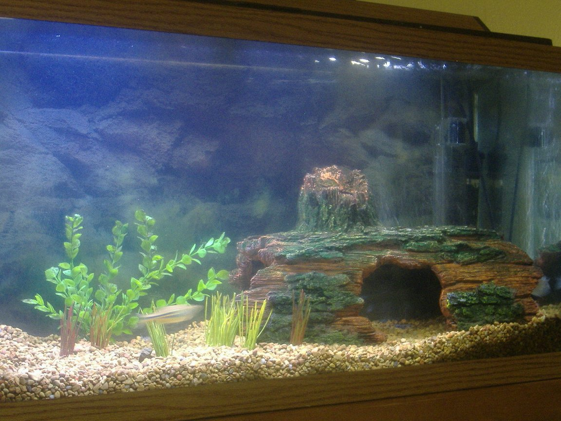 30 gallons freshwater fish tank (mostly fish and non-living decorations) - this is my 30 gallon tank