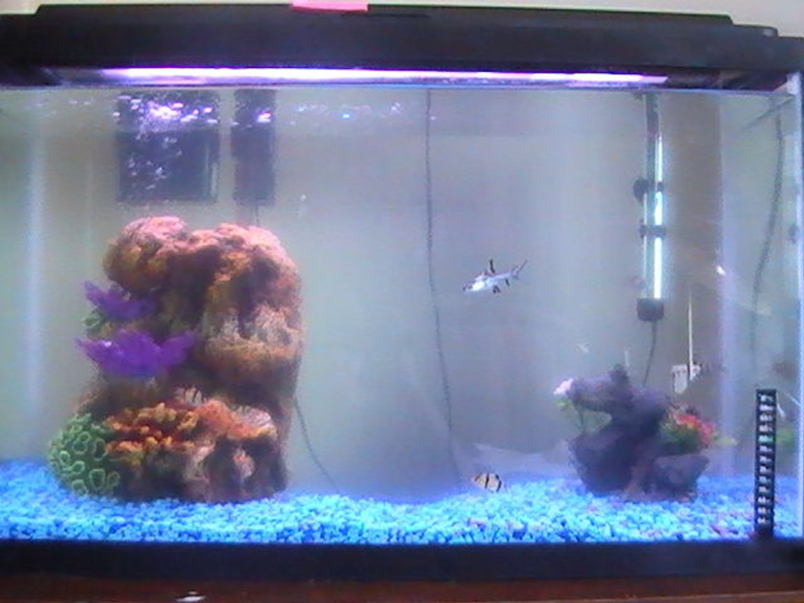 30 gallons freshwater fish tank (mostly fish and non-living decorations) - Full-View of Tank