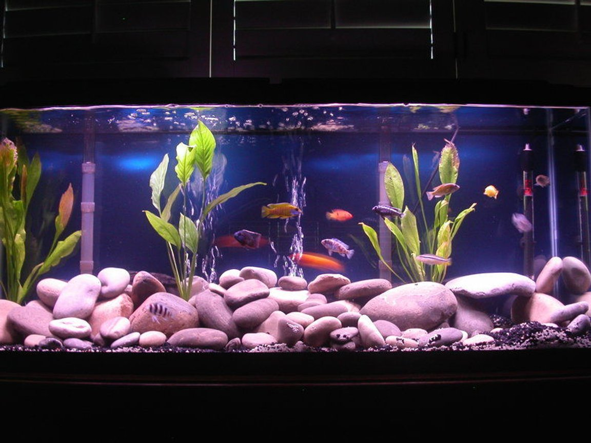 55 gallons freshwater fish tank (mostly fish and non-living decorations) - 55 gallon. two double whisper 60 gallon filters. riverstones. cichlid mix with black gravel and 3 sword plants.