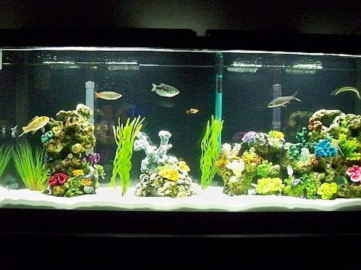 55 gallons freshwater fish tank (mostly fish and non-living decorations) - 55 gal with assorted fish