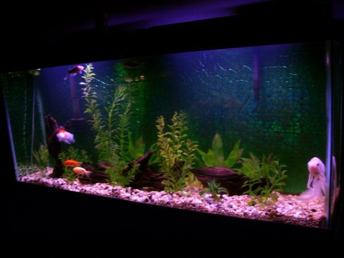 33 gallons freshwater fish tank (mostly fish and non-living decorations) - Golfish tank. No live plants.